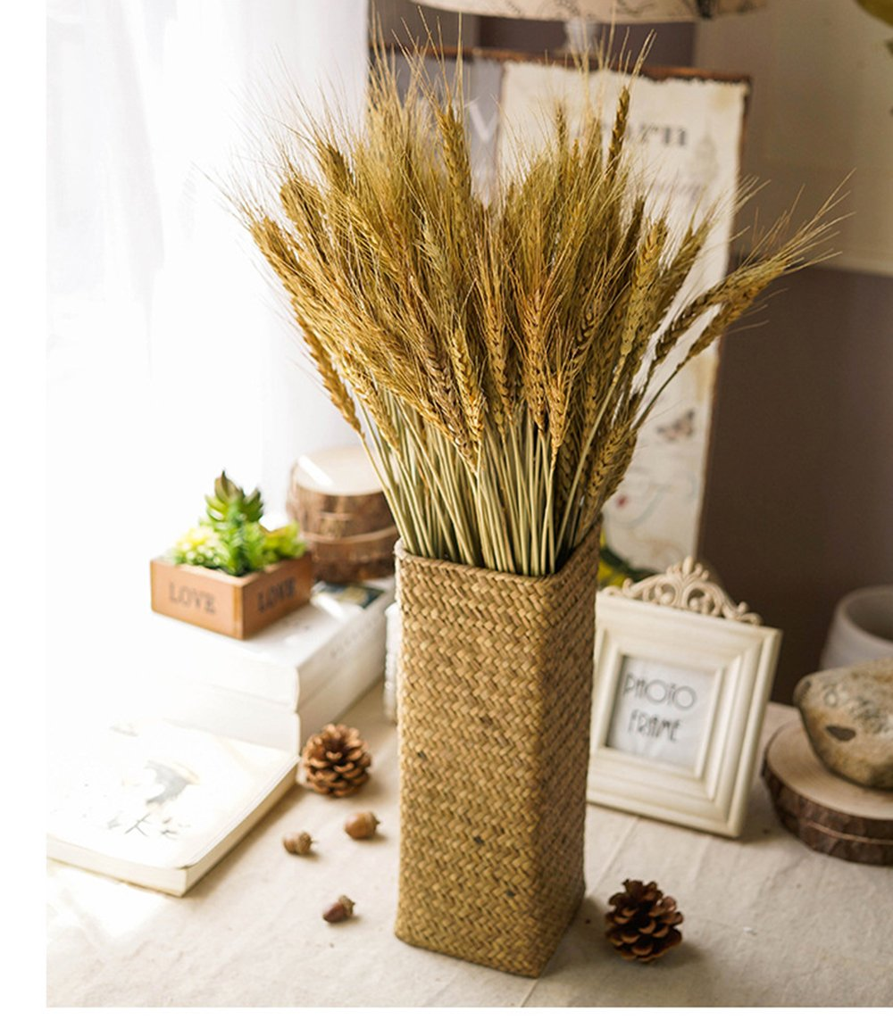 YSBER 100 PCS Dried Branch Wheat &Drying of Natural Wheat Stem for Christmas Natural Wedding Home Office Decor … (Wheat)