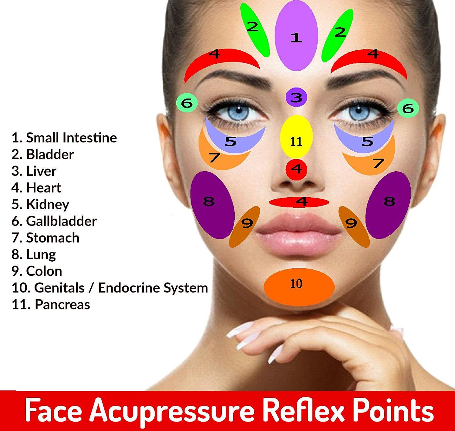 Amazon com: Acupressure Therapy Power Points Face Roll for Facelift