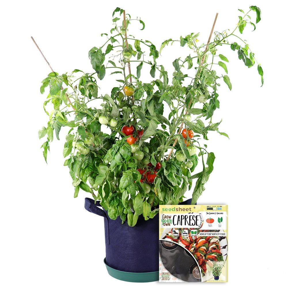 Grow Your Own Caprese Partial Kit - AS SEEN ON SHARK TANK - Fast-Growing Organic NonGMO Recipe Garden Kit