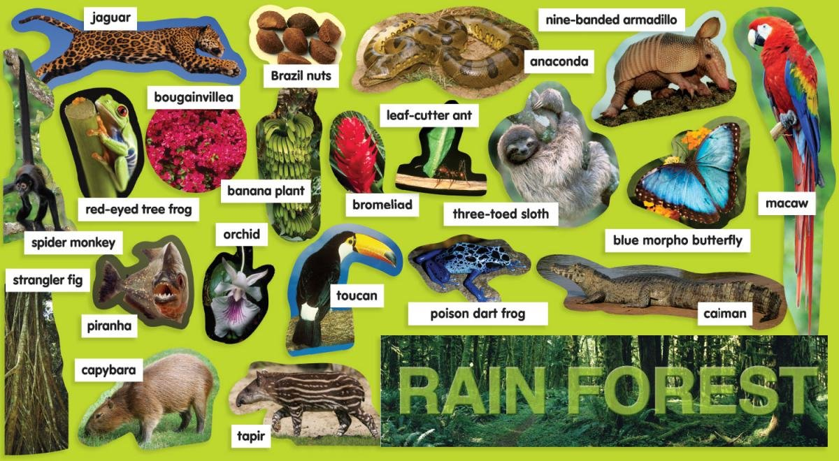 Rainforest Plants & Animals Mini Bulletin Board Teacher' s Friend TF8077 EDUCATION / General NON-CLASSIFIABLE Non-Fiction Novelty OVERSIZED BOOKS