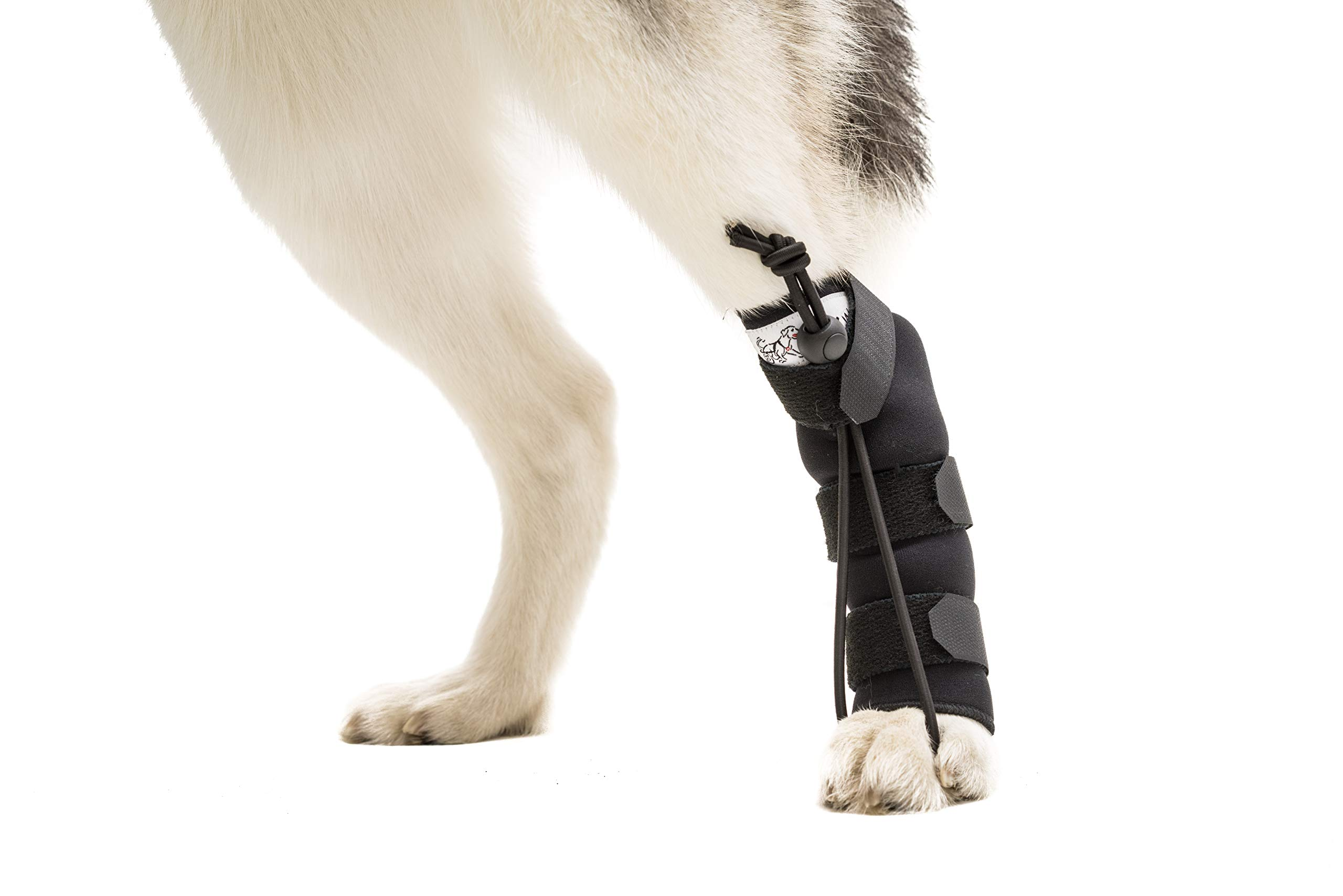 Walkin' Rear No-Knuckling Training Sock Helps Dogs Pick up Their feet When knuckling Under or dragging Their Rear Paws by Walkin'