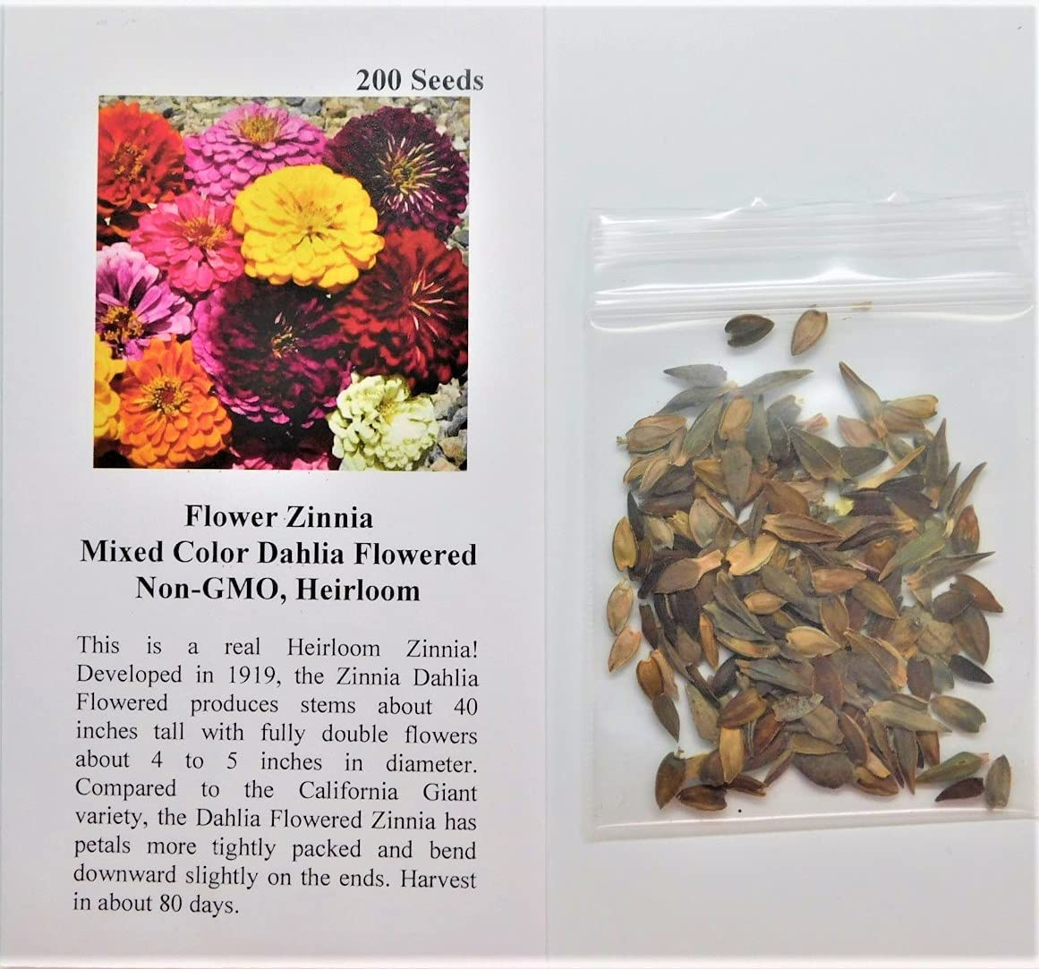 David's Garden Seeds Flower Zinnia Mixed Color Dahlia Flowered 1133 (Multi) 200 Non-GMO, Heirloom Seeds