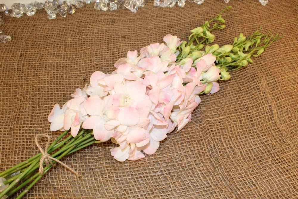 Athena's Garden Pink Fresh Bunch 10 Stems Dendrobium Jinda Sweet Cut Orchids