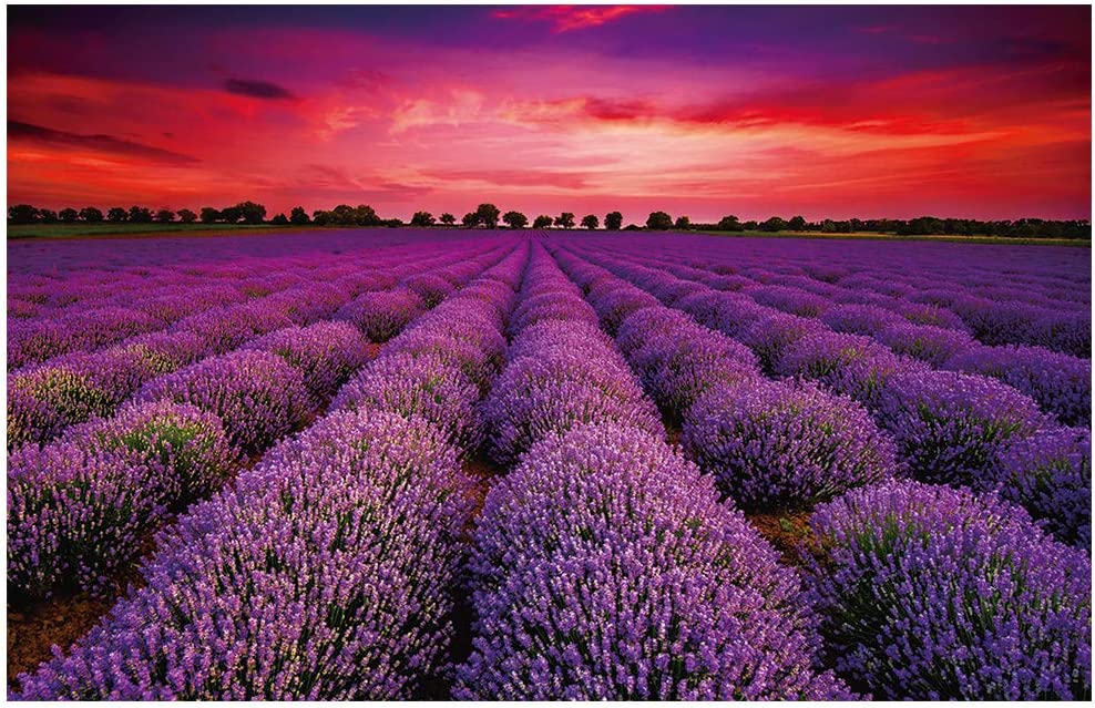Puzzles 1000 Piece for Adults Unique France Provence Lavender Field Summer Sunset Landscape Jigsaw Puzzle Art Wall Hanging Decor 29.53 x19.69 inch