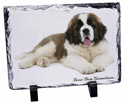 St, perro de raza san Bernardo Love You Grandma x Slate ...