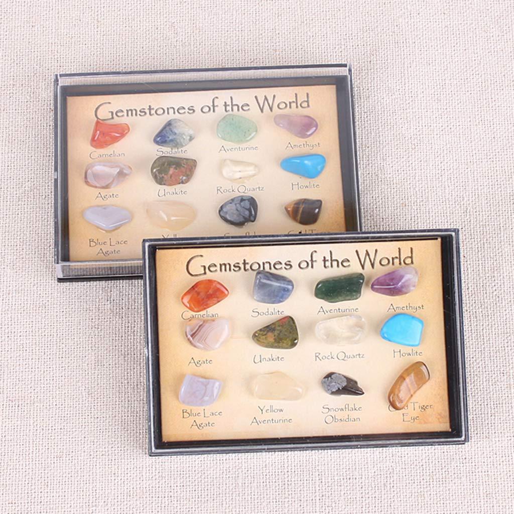 Sharplace Muestra de Rocas y Minerales con Caja de Presentaci/ón Herramienta de Ense/ñanza de Geolog/ía para Ni/ños