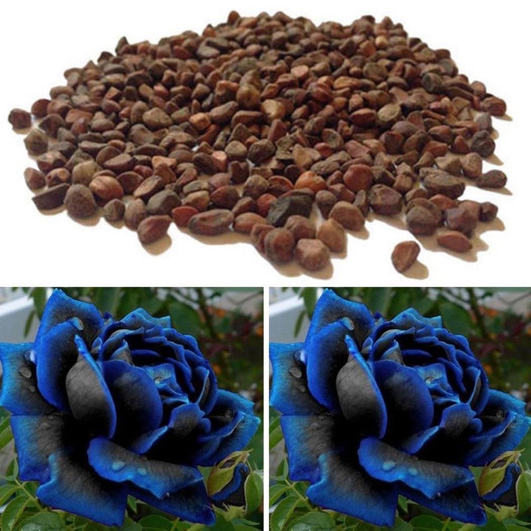 Oliote New Nice Adorable Flower Fragrant Seeds Fragrant Blooms Rose Seed Flowers