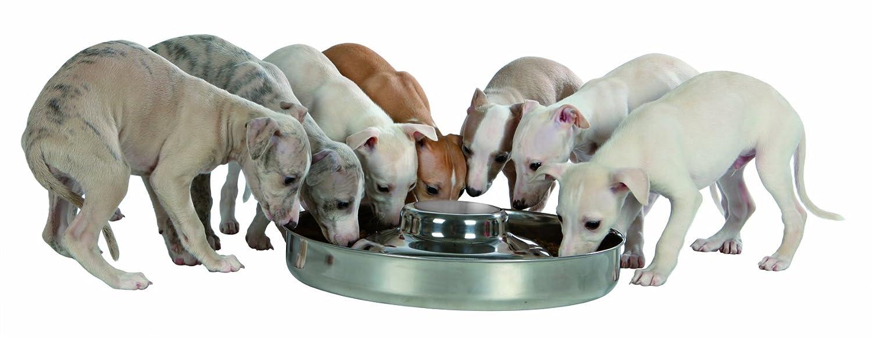 Trixie Comedero Cachorros, Acero Inoxidable, 1.4 l, 29 cm, Plata, Dia: Amazon.es: Productos para mascotas