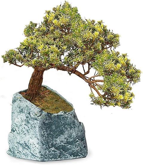 Amazon Com Dahlia Stone Like Handmade Concrete Succulent Planter Plant Pot Flower Pot Bonsai Pot 1 Garden Outdoor