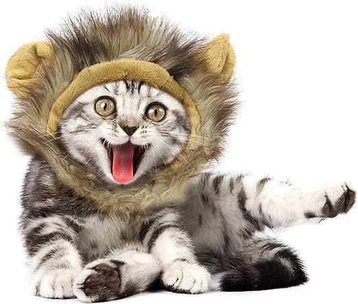YOMI disfraz para mascota, elegante y cómodo y esponjoso para gato, gato, melena de león, peluca para cosplay, Halloween, Navidad, festival de fiesta: Amazon.es: Productos para mascotas