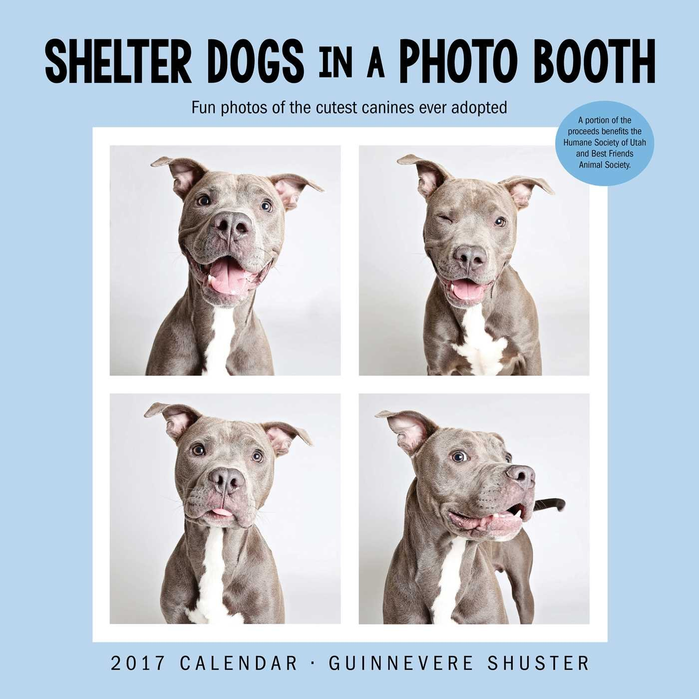 Shelter Dogs in a Photo Booth 2017 Wall Calendar by Andrews McMeel Publishing