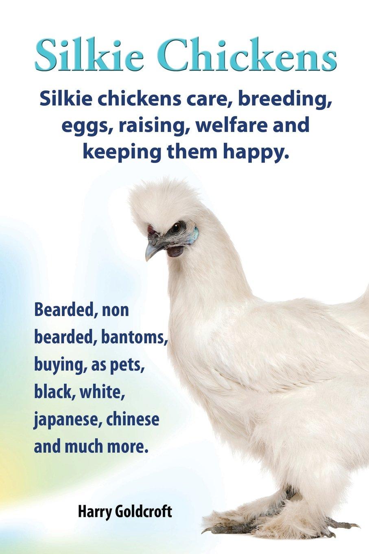 Silkie Chickens. Silkie Chickens Care, Breeding, Eggs, Raising ...