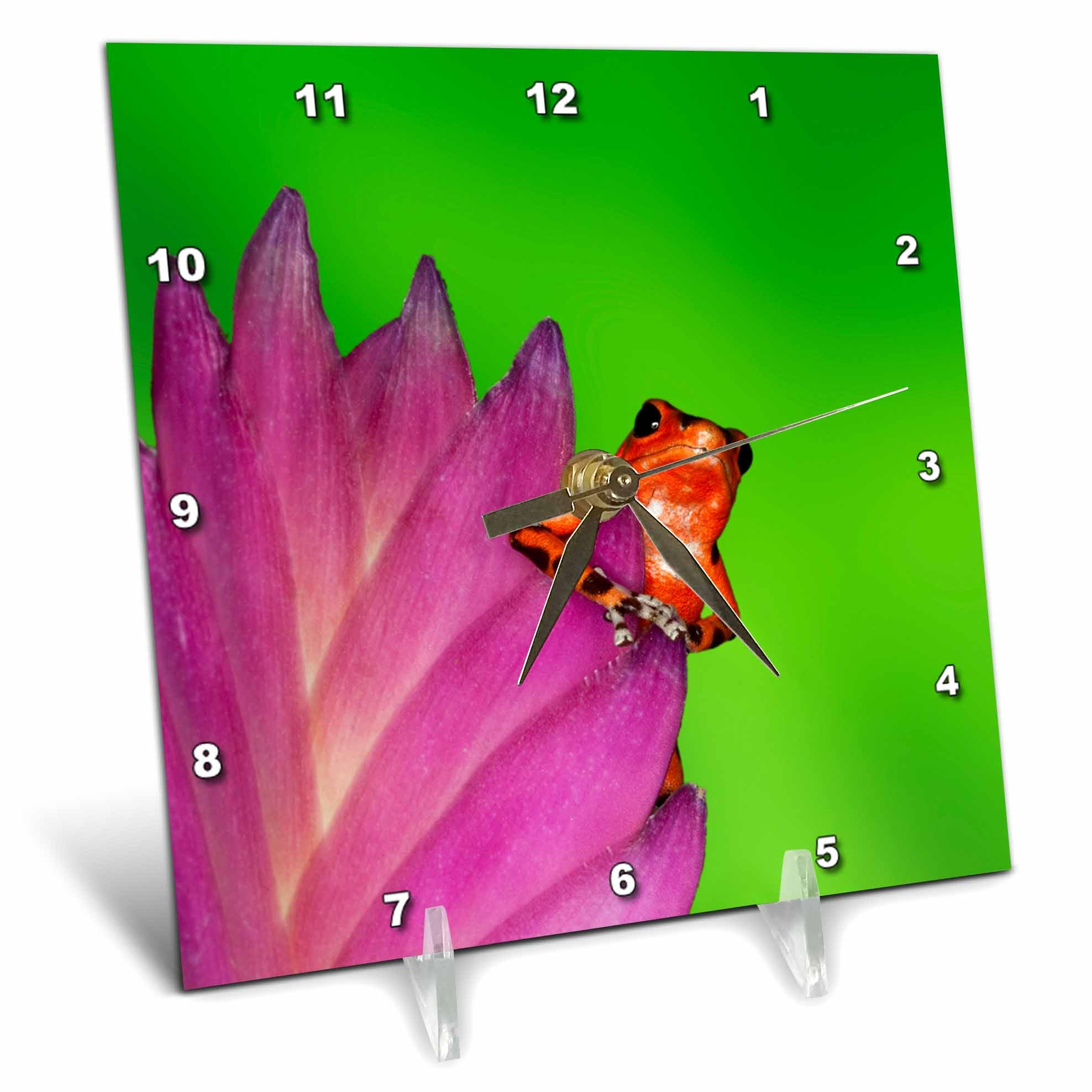 3dRose Danita Delimont - Frogs - South America, Panama. Strawberry poison dart frog on bromeliad. - 6x6 Desk Clock (dc_278317_1)