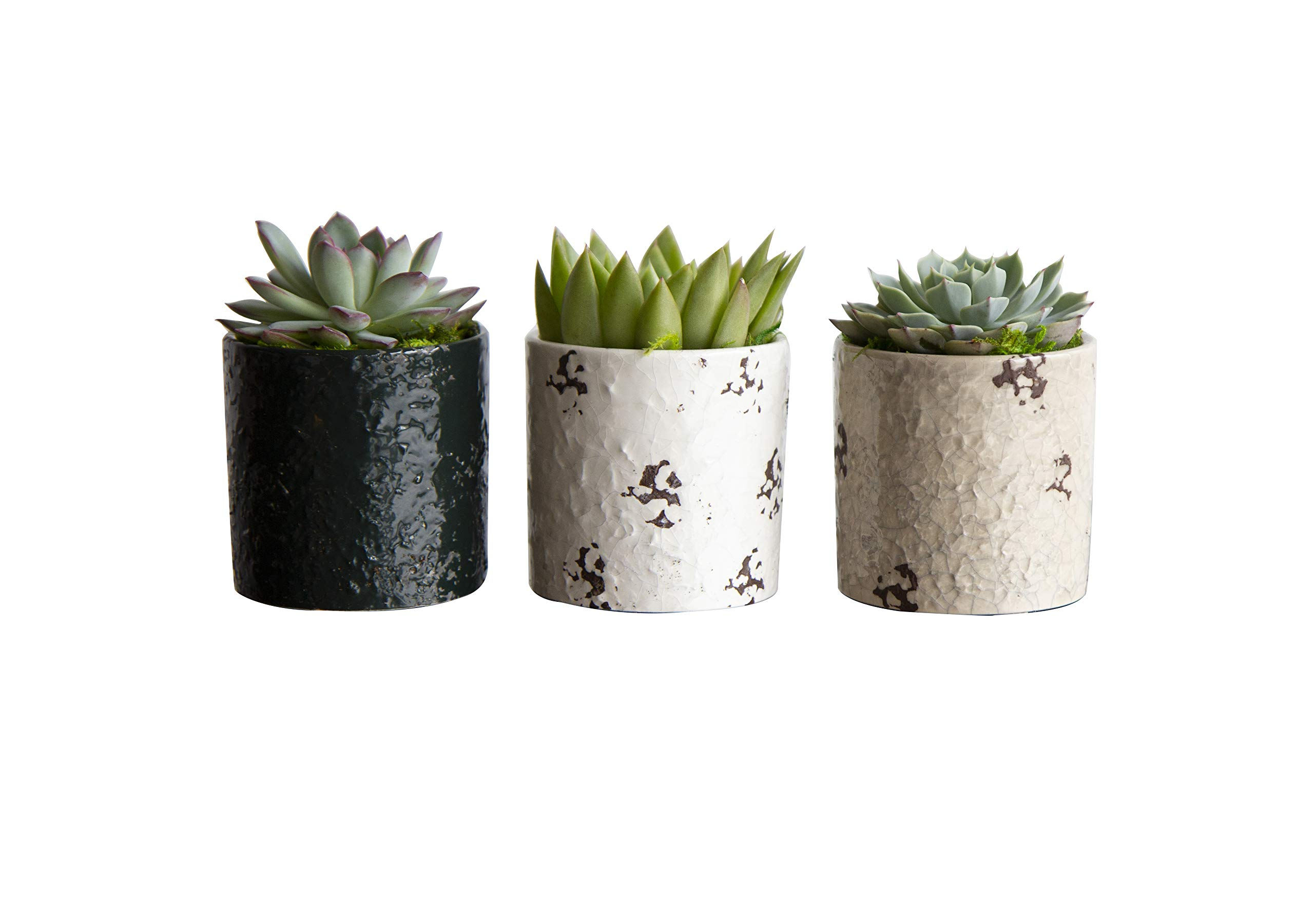 Hallmark Flowers Succulents