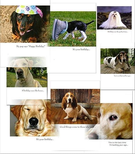 Amazon FUNNY 40 ANIMAL BIRTHDAY CARDS WITH DOGS Bassett
