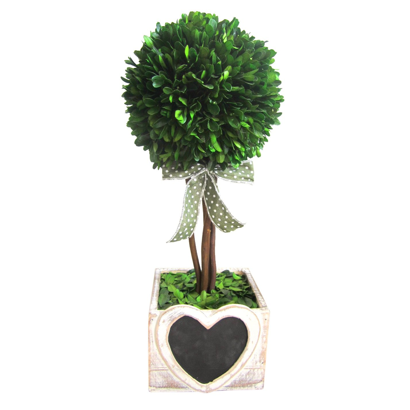 Jeco 16-inch Preserved Boxwood Pot with Heart Wood Box by Jeco Inc. (Image #1)