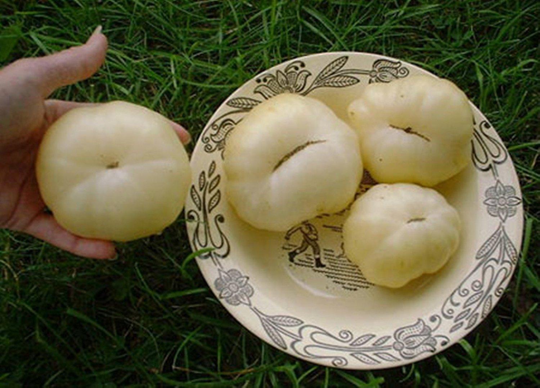 レア野菜の種トマトBelyyギガントホワイトジャイアントビーフステーキ家宝 B00QDN26R8