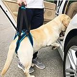 KOBWA - Arnés de elevación para Perro para Ayuda a la Cadera, Estabilidad, Dolor de articulación de Personas Mayores