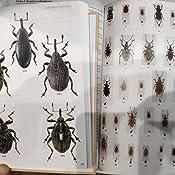 Guia de campo de los coleopteros de europa GUIAS DEL NATURALISTA: Amazon.es: ALBOUY, VINCENT, RICHARD, DENIS, PIJOAN ROTGÉ, MANUEL: Libros