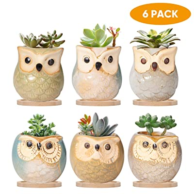 2 Inch Owl Pot, Ceramic Succulent Pot with Drinage, Small Planter Pot with Hole, Mini Flower Pot Flowing Glaze Base Serial Set with Baboo Tray, Plant Container Cactus Planter 6 Pack : Garden & Outdoor