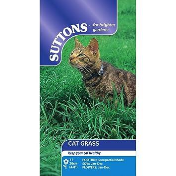 Suttons - Cat Grass Seeds