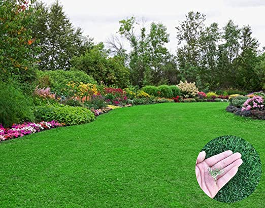 360pcs Semillas de Césped para Jardín Animales, Semillas Hierba Resistentes Prado para Pisar y Jugar: Amazon.es: Jardín