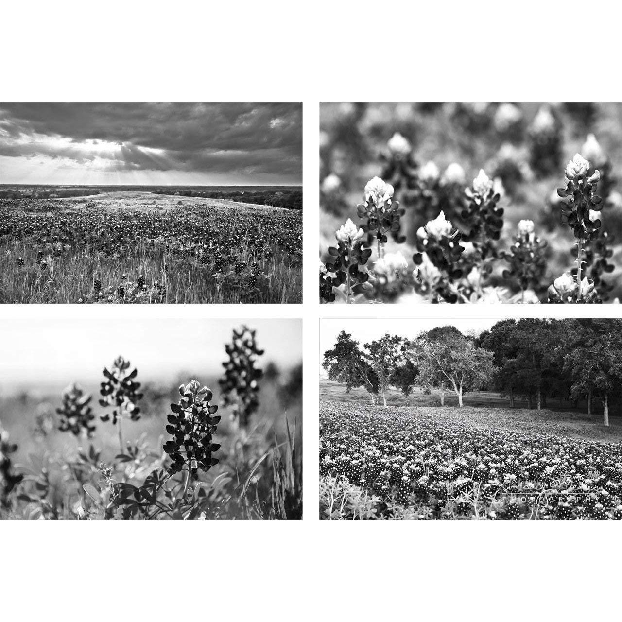 black and white texas photography large wall art where the buffalo roam abilene texas western landscape ranch decor Texas photography