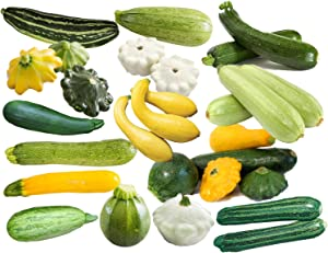 This is a Mix!!! 50+ Zucchini and Squash Mix Seeds 12 Varieties Non-GMO Delicious Grown in USA. Rare, Super Profilic