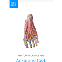 Anatomy flashcards: Ankle and foot: Learn all bones, ligaments and muscles on the go (Kenhub Flashcards Book 42…