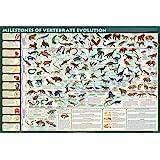 Milestones of Evolution Poster Print