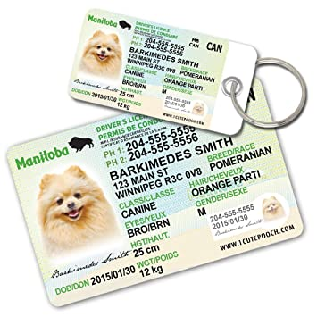 Amazon manitoba driver licence custom dog tags for pets 2 manitoba driver licence custom dog tags for pets 2 and wallet card personalized negle Images