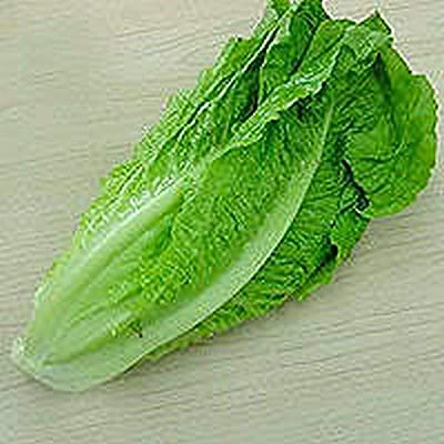 300 Seeds Lettuce - Romaine - Parris Island : Garden & Outdoor