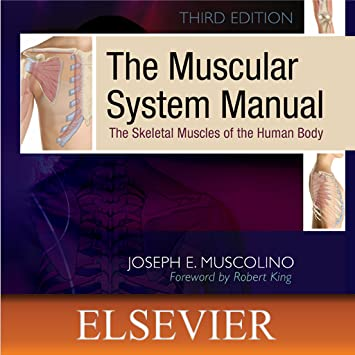 Amazon.com: The Muscular System Manual: The Skeletal Muscles of the ...