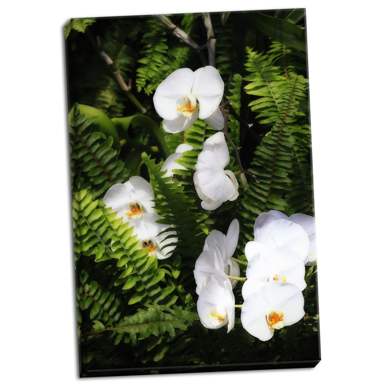 Orchids & Ferns I, Fine Art Photograph By: Alan Hausenflock; One 24x36in Hand-Stretched Canvas