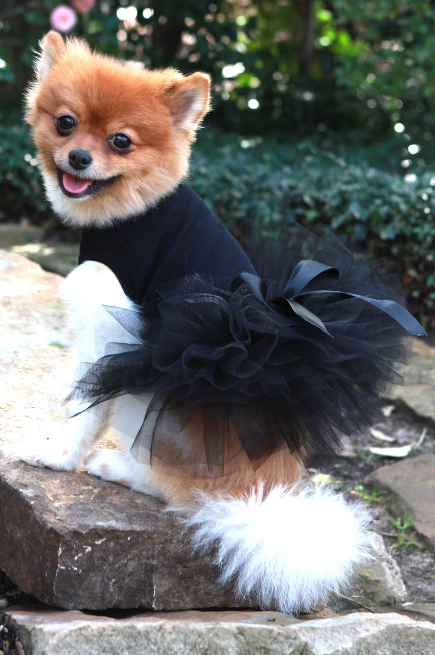 Dog in the Closet, Black Tutu Dress