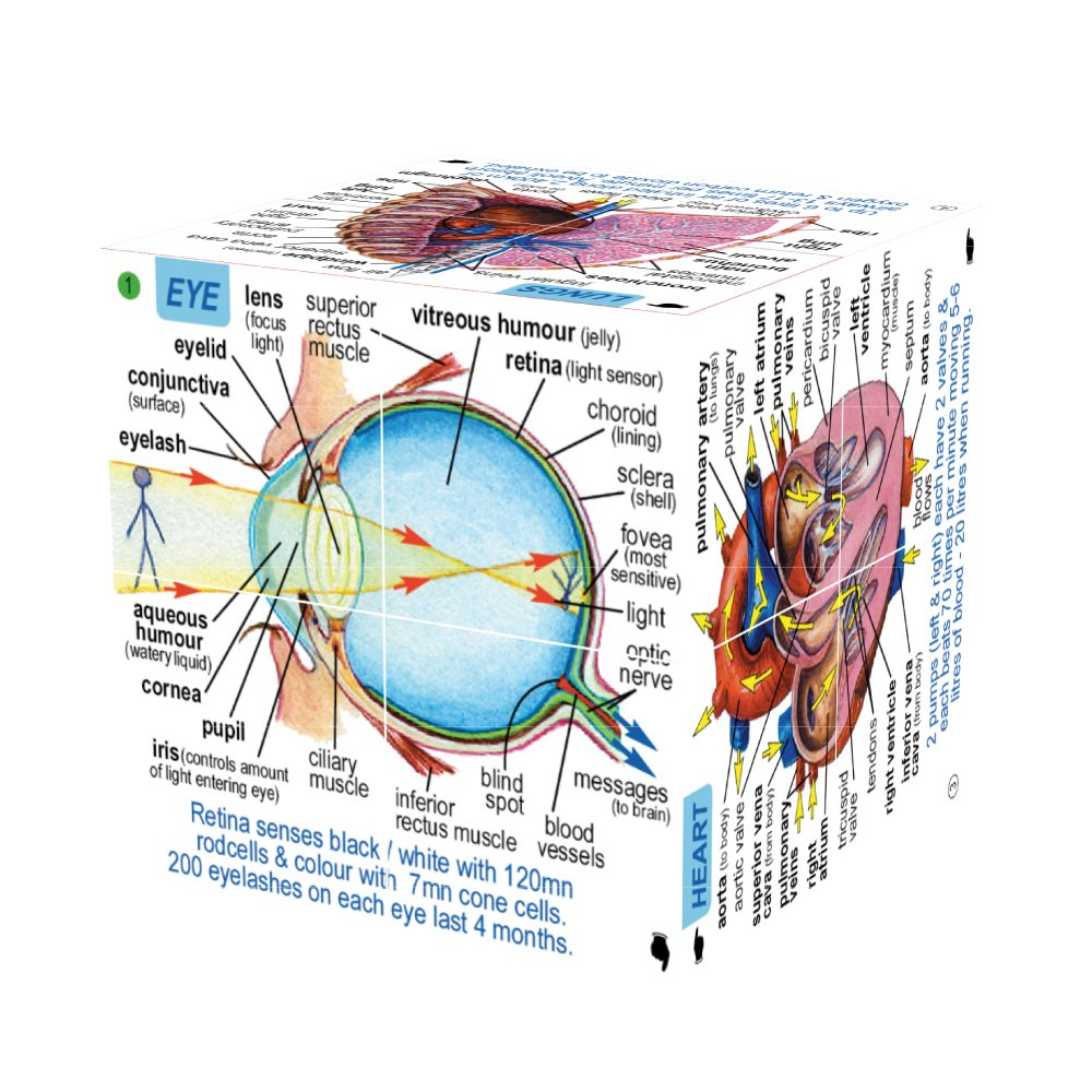 Zoobookoo Scientific Human Body Cube Book Systems And Statistics Cable Tv Network Diagram Photo Album Diagrams Toys Games