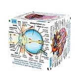 ZooBooKoo Libro-cubo Corpo umano (Versione in lingua inglese)