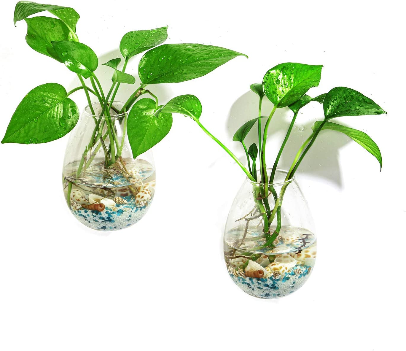 Ivolador 2PCS Wall Hanging Glass Plant Terrarium Container Egg Shape Perfect for Home Office Garden Decor Wedding