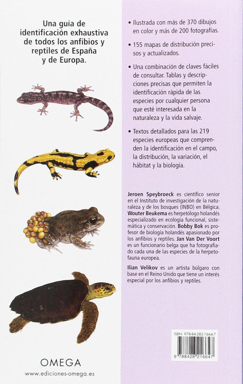 ANFIBIOS Y REPTILES DE ESPAÑA Y DE EUROPA GUIAS DEL NATURALISTA: Amazon.es: SPEYBROECK, JEROEN, BEUKEMA, WOUTER, BOK, BOBBY, VAN DER VOORT, JAN, PIJOAN ROTGER, MANUEL: Libros