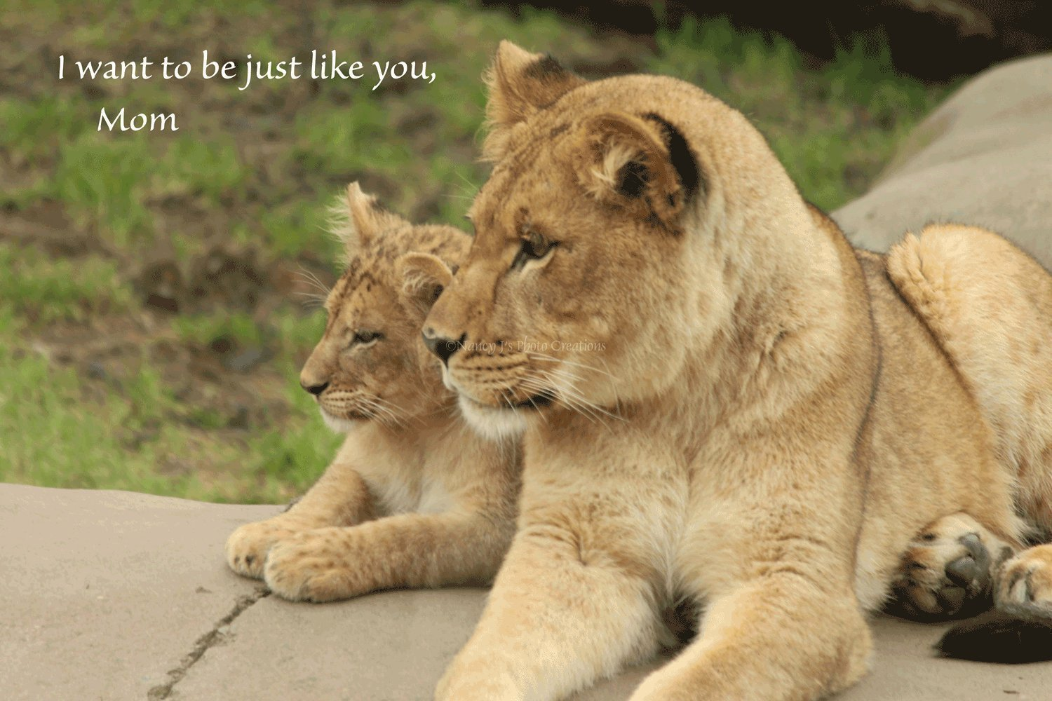 Amazon.com: Gift for Mom Unframed Photo of Lioness and Lion ...