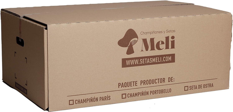 SETAS MELI | Alpaca Productora Seta de Ostra | Para cultivar en casa | Alpaca perfecta para regalar | Hecho en España