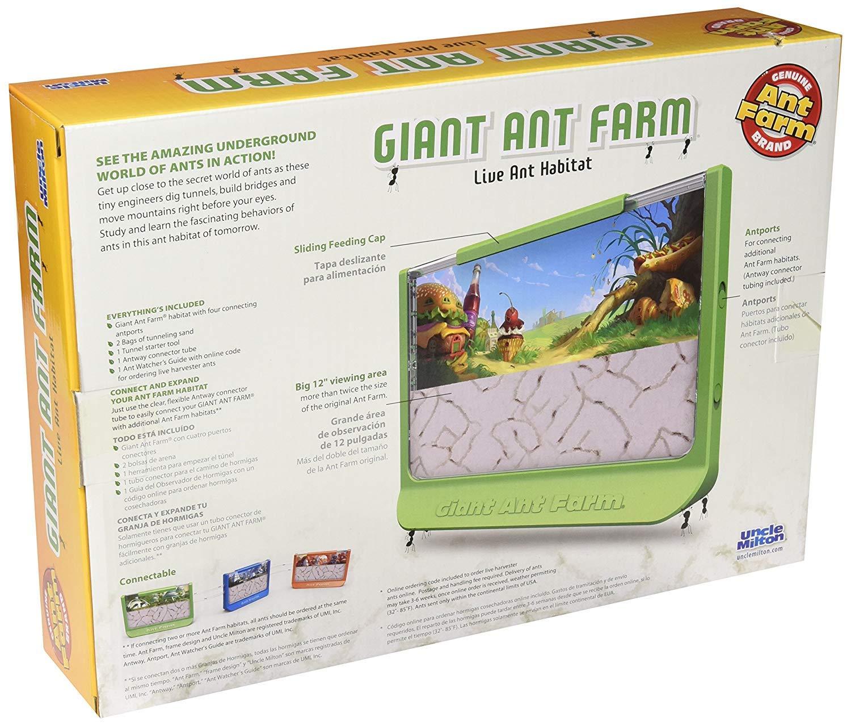 Amazon.com  Uncle Milton Giant Ant Farm Kit  Toys   Games 23bd19504