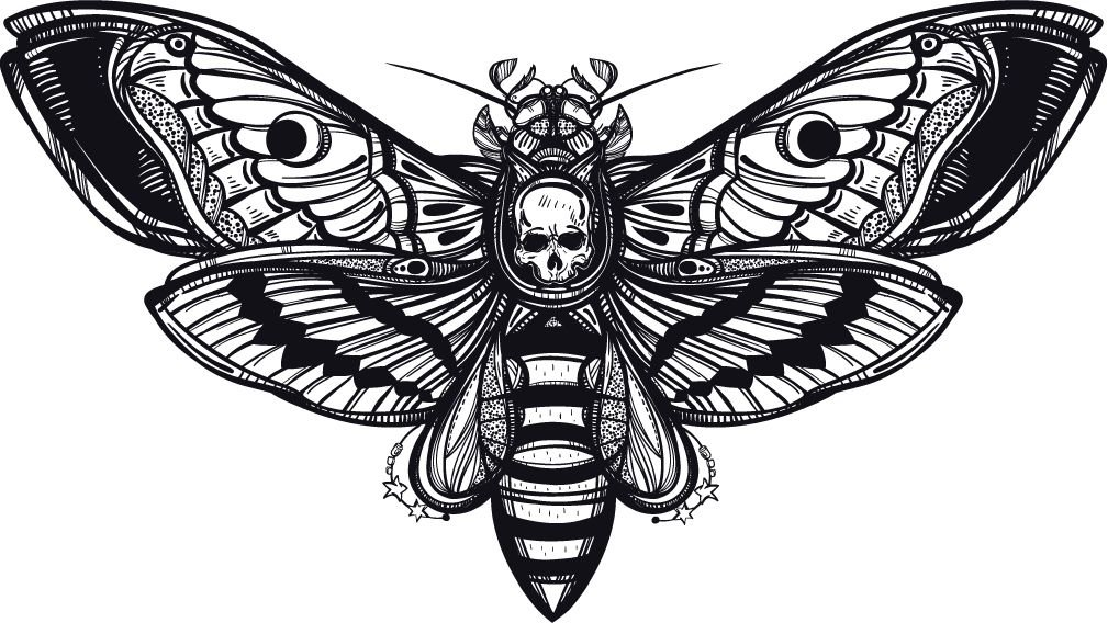 Deaths Head Hawk Moth Home Decal Vinyl Sticker 14'' X 8''
