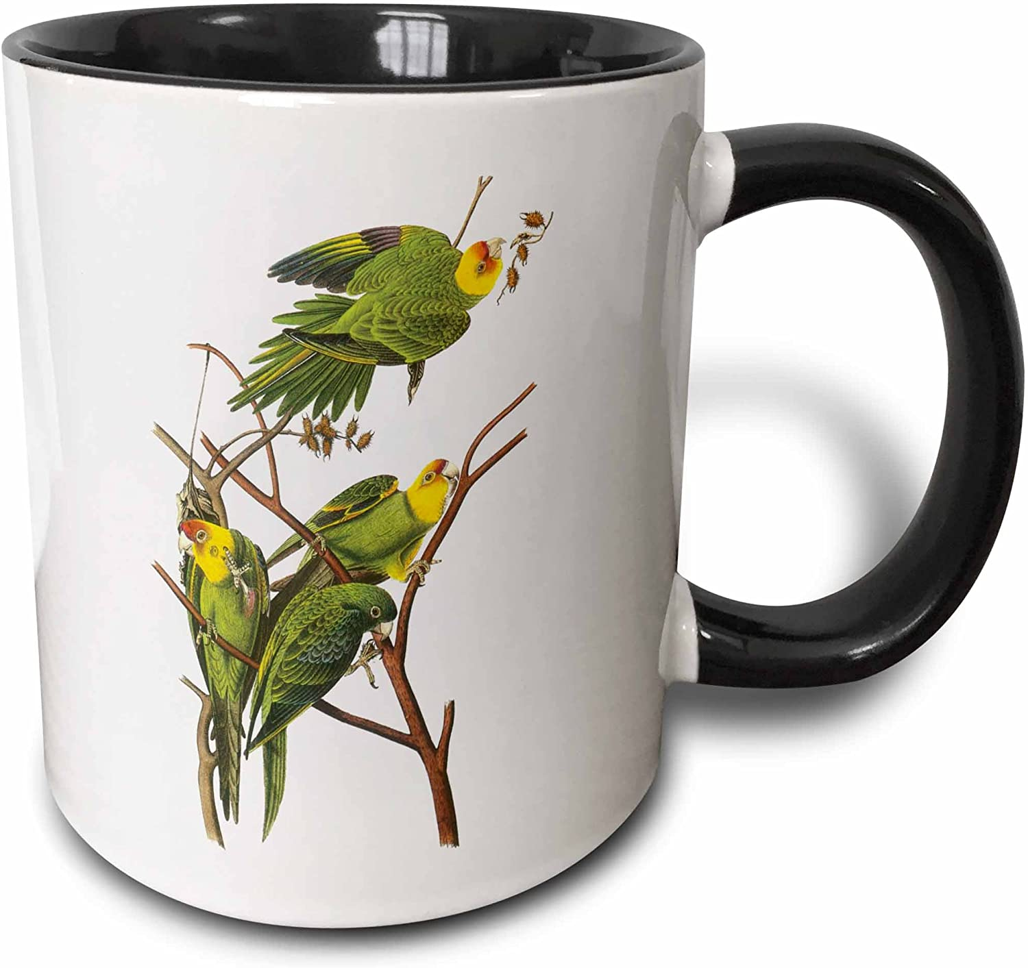 Amazon Com 3drose Branch Full Of Parrots Mug 11 Oz Black Kitchen Dining