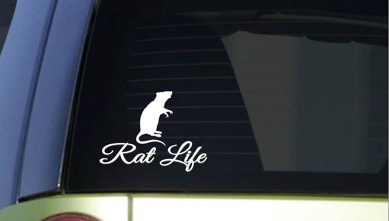 EZ-STIK Rat LifeI278 6