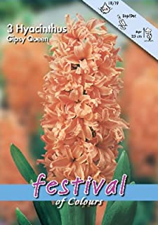 Portal Cool Seeds Package: 3 Hyacinth Bulbs Gipsy Queen