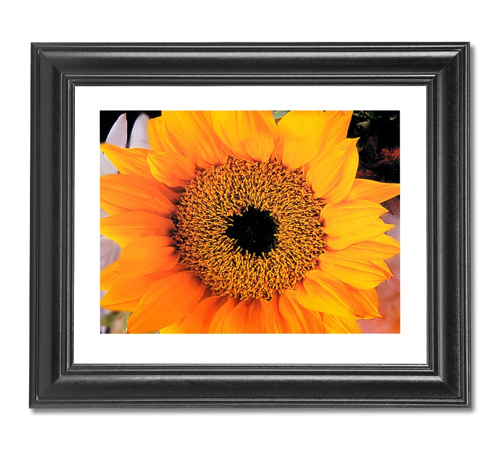 Amazon.com: Yellow Sunflower Flower Photo Wall Picture Framed Art ...
