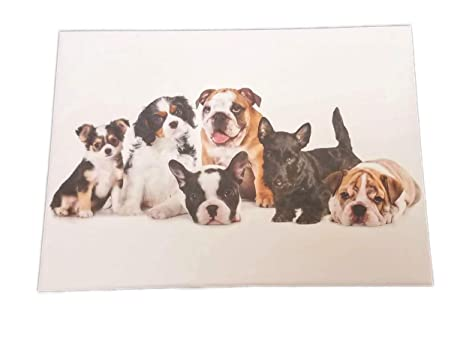 Amazoncom Group Of Puppies Box Set Of 15 Note Cards 35 X 5