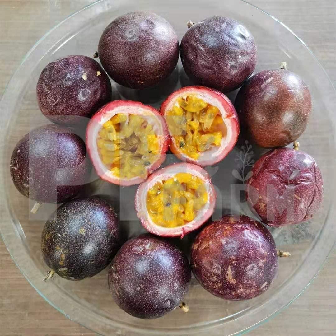 PF FARM Dark Purple Fresh Ripe Passion Fruit Florida No.1 (2 Dozen / 24 Counts)