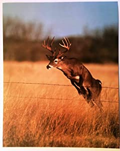 NDTS Deer Poster Jumping in Field Barb Wire Poster 1991 Wildlife Lithograph Art Indoor/Outdoor Wall Decor Metal Sign Poster 8x12 inch